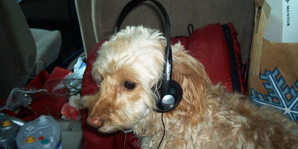 dog,headphone